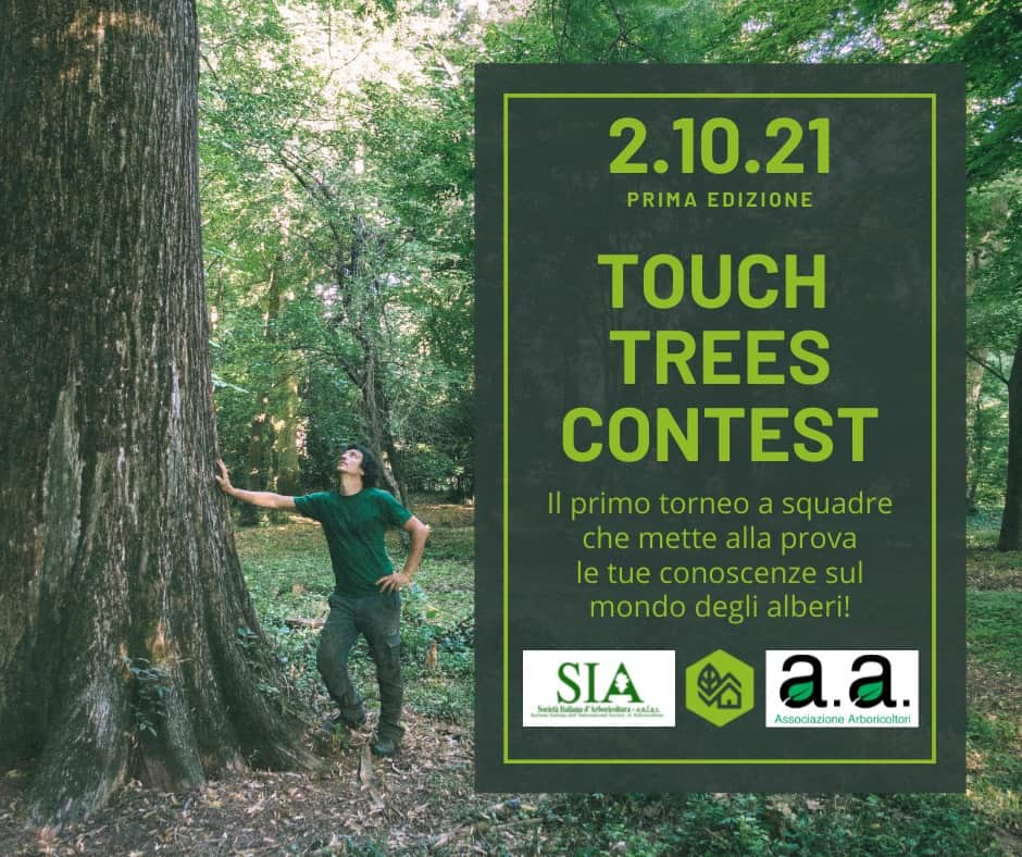 touch trees contest